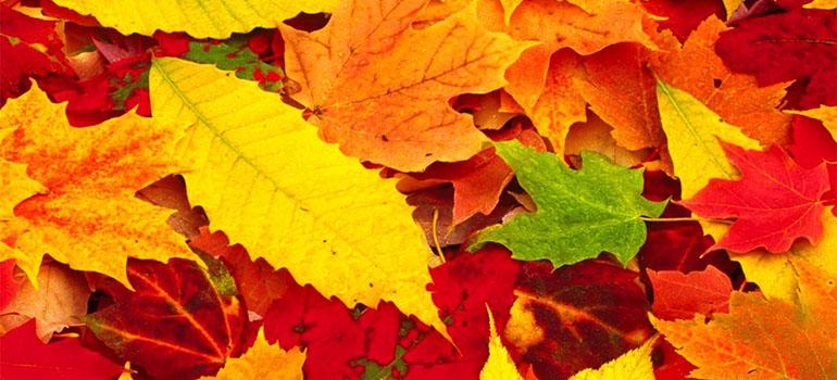 Осенние скидки на напольные ПВХ покрытия